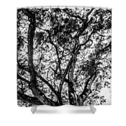 Black And White Tree 2 Shower Curtain