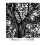 Black And White Tree 4 Shower Curtain