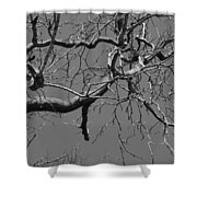 Black And White Tree Branch Shower Curtain