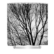 Black And White Tree Branches Silhouette Shower Curtain