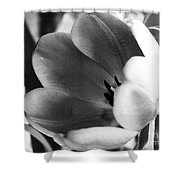 Black And White Tulips #1 Shower Curtain