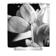 Black And White Tulips #4 Shower Curtain
