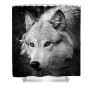 Black And White Wolf Shower Curtain