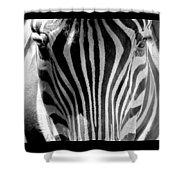Black And White Zebra  Shower Curtain