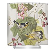 Black And Yellow Warblers Shower Curtain