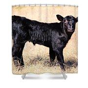 Black Angus Baby Calf Shower Curtain