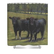 Black Angus Buddies Shower Curtain