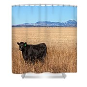 Black Angus Looking Shower Curtain