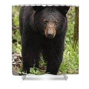 Black Bear At Cades Cove Shower Curtain