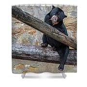 Black Bear Cub Sitting On Tree Trunk Shower Curtain