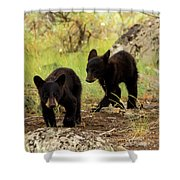 Black Bear Cubs Shower Curtain