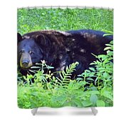 A Florida Black Bear Shower Curtain