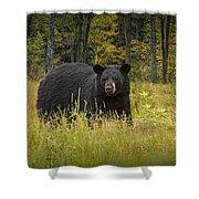 Black Bear In The Grass Shower Curtain