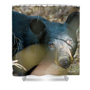 Black Bear Oh My Shower Curtain