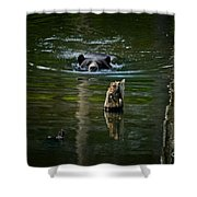 Black Bear Pictures 104 Shower Curtain