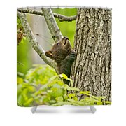 Black Bear Pictures 82 Shower Curtain