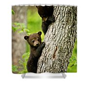 Black Bear Pictures 84 Shower Curtain