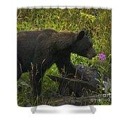 Black Bear-signed-#6549 Shower Curtain