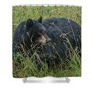Black Bear Sow Shower Curtain