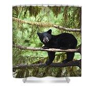Black Bear Ursus Americanus Cub In Tree Shower Curtain