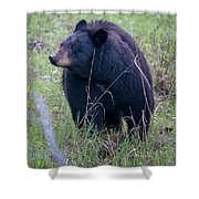 Black Bear Yellowstone Np_grk7085_05222018 Shower Curtain