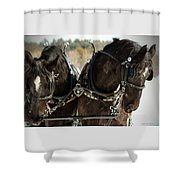 Black Beauties Shower Curtain