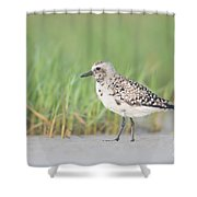 Black-bellied Plover I Shower Curtain