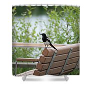 Black-billed Magpie Pica Hudsonia Shower Curtain