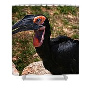 Black Bird Shower Curtain