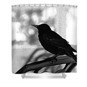 Black Bird Bw Shower Curtain