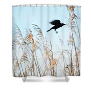 Black Bird In Cat Tails Shower Curtain