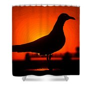 Black Bird Red Sky Shower Curtain
