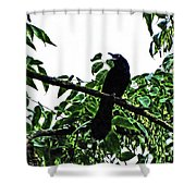 Black Bird Sings Shower Curtain