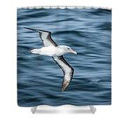 Black-browed Albatross Gliding Over Deep Blue Waves Shower Curtain