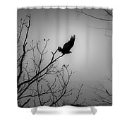 Black Buzzard 1 Shower Curtain