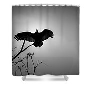 Black Buzzard 5 Shower Curtain