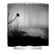Black Buzzard 8 Shower Curtain