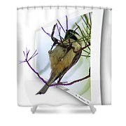 Black-capped Chick-a-dee Shower Curtain
