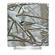 Black Capped Chickadee - Poecile Atricapillus Shower Curtain