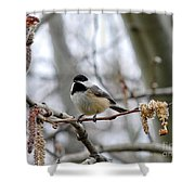 Black-capped Chickadee 20120321_39a Shower Curtain
