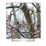 Black-capped Chickadee 20120321_39b Shower Curtain