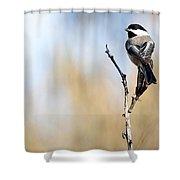 Black-capped Chickadee Shower Curtain