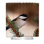 Black-capped Cickadee II Shower Curtain
