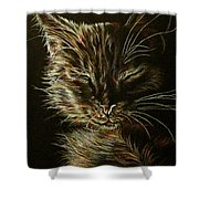 Black Cat Drawing Shower Curtain