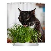 Black Cat Eating Cat Grass Shower Curtain