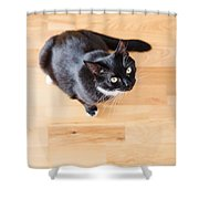 Black Cat Looking At You Shower Curtain