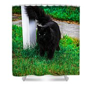 Black Cat Maine Shower Curtain