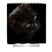 Black Cat Shower Curtain
