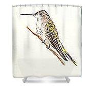 Black Chinned Hummingbird Shower Curtain