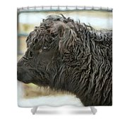 Black Cow Shower Curtain